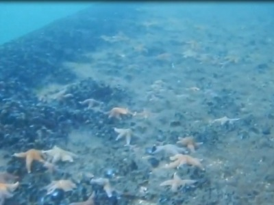 Faune sous-marine - Floatgen
